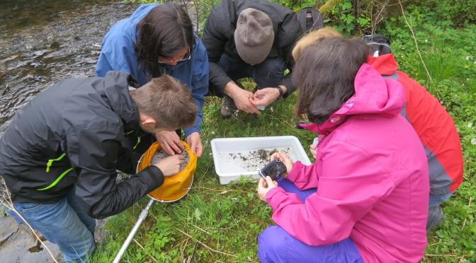 Lærere på feltkurs undersøker innholdet i ferskvannshåv