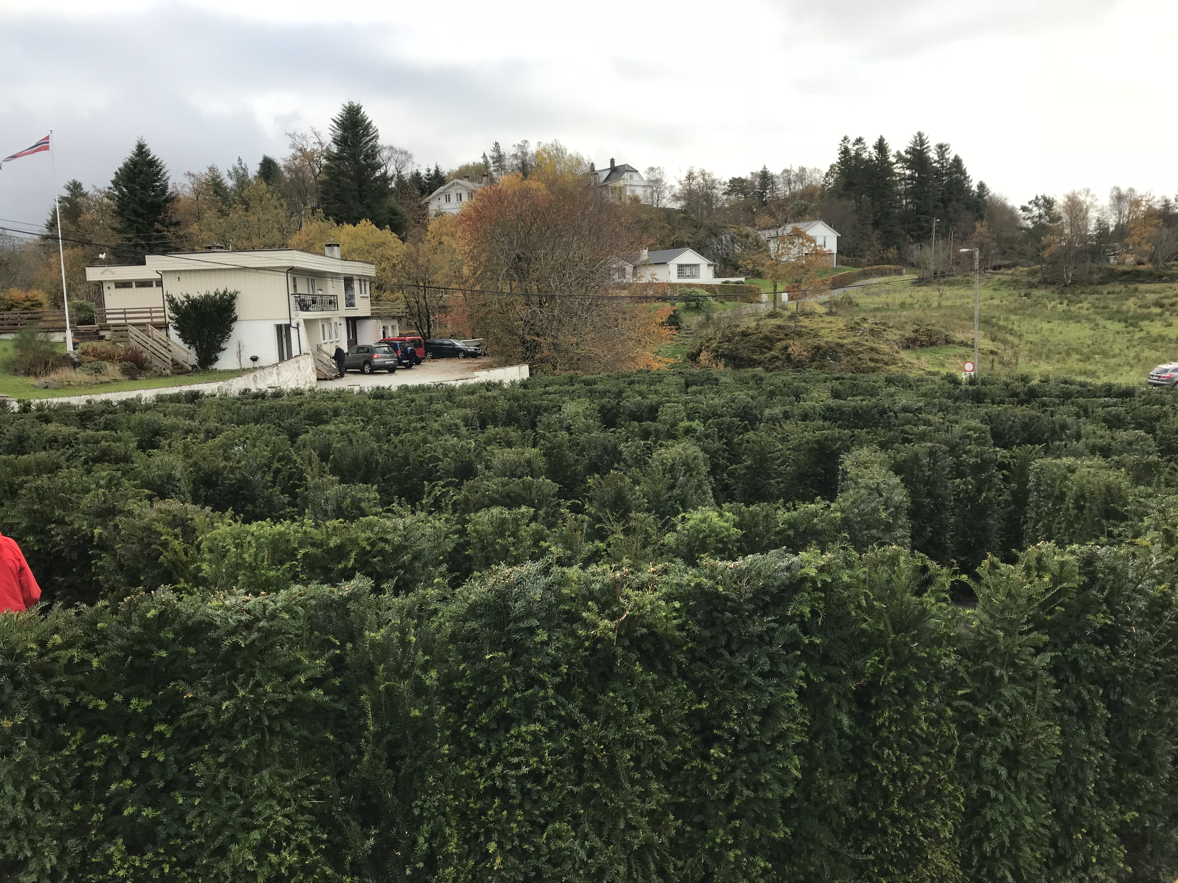 Labyrint av barlind